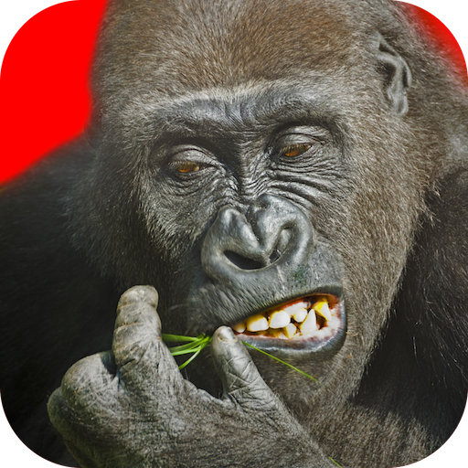 Flying Gorilla Mod apk download – Mod Apk 2.143 [Unlimited money] free for Android.