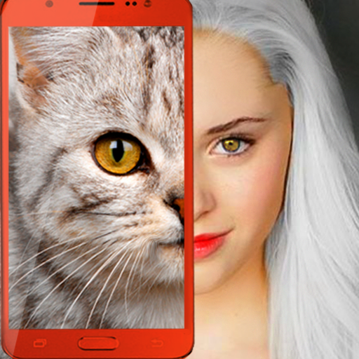 Mod apk download – Mod Apk Kitten: what cat are you? joke  2.7 [Unlimited money] free for Android